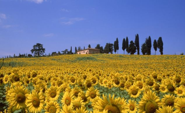 EU Bike Tours_Tuscany